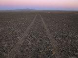 Tire Tracks on the Surface of the Atacama Desert Photographic Print by Joel Sartore
