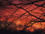 Twilight View Through Silhouetted Tree Branches Photographic Print by Michael Fay