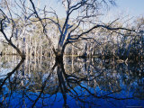 Blue Gum Trees and Reflections in Wetland Photographic Print by Jason Edwards
