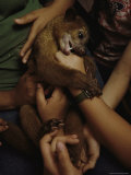 A Pet Kinkajou in the Arms of Children in Parque Natural Metropolitano Photographic Print by Mattias Klum