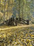 Ponte pedonale a Sentinel Meadow coperto di foglie d'autunno Stampa fotografica di Moritsch, Marc