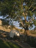 Covered Wagon under a Tree at Bar 10 Ranch Near the Grand Canyon Photographic Print by Todd Gipstein