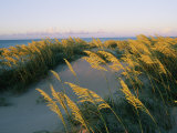 Sea Oats, Dunes, and Beach at Oregon Inlet Photographic Print by Skip Brown