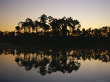 Silhouetted Pine Trees Reflected in Water at Dusk Photographic Print by Raul Touzon