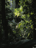 A Rain Forest Scene in the Costa Rican Forest Photographic Print by Ed George