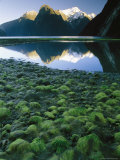 Mountains Reflected in Milford Sound Photographic Print by Mark Cosslett