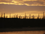 Spruce Trees are Silhouetted by the Sunset Near the Mackenzie River Photographic Print by Raymond Gehman