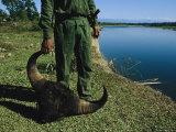A Burmese Man Holds onto the Horns of a Dead Buffalos Head Photographic Print