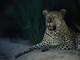 Portrait of a Male Leopard Photographic Print by Kim Wolhuter