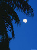 Palm Tree Silhouetted against the Sky at Moonset Photographic Print by Mark Cosslett