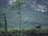 Farmer, Water Buffalo, Limestone Karst Mountains Behind, Guangxi Photographic Print by Raymond Gehman