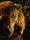 A Stuffed Replica of a Diprotodon at the Wonambi Fossil Center Photographic Print by Jason Edwards