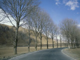 A Tree-Lined Road in Sichuan Province, Peoples Republic of China Photographic Print by David Edwards