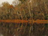 Flood Plain Forest Along the Cape Fear River Photographic Print by Raymond Gehman