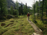 A Hiker Treks Along a Path in Yoho National Park Photographic Print by Michael Melford