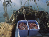 Tubs of Rockcod and Empty Crab Traps on a Fishing Boat Photographic Print by Sisse Brimberg
