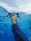 Underwater View of Mans Arm Reaching Towards a Pools Surface Photographic Print by Clarita Berger