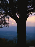 Sunset and Silhouetted Oak over the Shenandoah Valley, Dickeys Ridge Visitors Center Photographic Print by Raymond Gehman