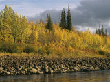Sunset Shines on Birch and Willow Trees Along the Ramparts River Photographic Print by Raymond Gehman