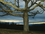 Sunset at Big Meadows with Bare Oak Tree Photographic Print by Raymond Gehman