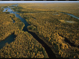 Aerial View of Forested Land and River in Wapusk National Park Photographic Print by Norbert Rosing