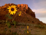 Desert Landscape with Rock Formation and Black-Eyed Susans Photographic Print by Raul Touzon