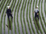 Two Women Laugh Together While They Are Standing in a Rice Paddy, Yoshida, Honshu Island, Japan Fotografisk tryk af Paul Chesley