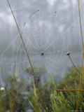 Spider Web with Dew near Okefenokee Swamp Park, Georgia Photographic Print by Joseph H. Bailey