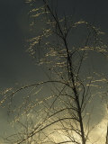 The Frozen Branches of a Small Tree Sparkle in the Sunlight, Waynesboro, Pennsylvania Stampa fotografica di Gehman, Raymond