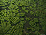 Raised Terraces in Northern Congo Suggest Past Cultivation Photographic Print by Michael Nichols