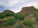 Desert Landscape with Rock Formations and Wildflowers Photographic Print by Raul Touzon