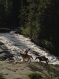 Packhorse Trip Through the Sierra Nevada Mountains, California Photographic Print by Phil Schermeister