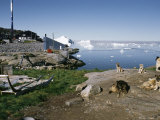 Sled Dogs and Pups Relax on a Rock Overlooking Ilulissat Glacier Photographic Print by Sisse Brimberg