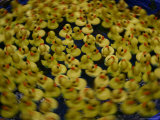 Swirling Activity of a Carnival Duckpond Quessing Game Photographic Print