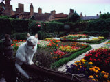 White Cat Perched on a Fence Overlooking the Gardens at Stratford-Upon-Avon, England Photographic Print by Sam Abell