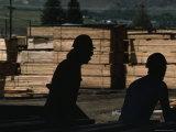 Workers Sort and Stack Lumber by Grade at the Salmon Sawmill Fotoprint van Joel Sartore