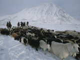 Nomadic Family Crosses Utreg Pass Enroute to Winter Pastures Photographic Print by Gordon Wiltsie