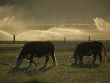 Farm Scene West of Chiloguin, Klamath Falls, Oregon Lámina fotográfica por Schermeister, Phil