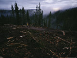 A Logging Crew Clearcuts in the Salmon National Forest Photographic Print by Joel Sartore