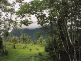 View of a Cloud-Covered Mountain Through Foliage at the Edge of a Rain Forest Photographic Print by Todd Gipstein