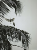 Egrets in a Palm Tree, Bali, Indonesia Photographic Print by Michael Nichols