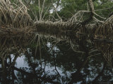 Lagoon Where Watermarks on Mangrove Roots Show Depth Changes Photographic Print by Michael Nichols