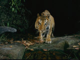 Tiger by a Water Hole Photographic Print by Michael Nichols