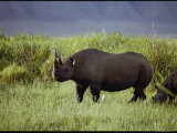 View of a Black Rhinoceros Photographic Print by George F. Mobley