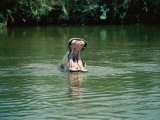 A Hippopotamus Yawns in the Water Photographic Print by Nicole Duplaix