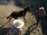 Cowboys Begin the Process of Breaking a Young Horse Photographic Print by Jodi Cobb