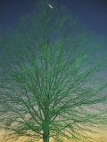 A Tree Appears Green Under Street Lights Photographic Print by Stephen Alvarez
