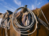 A Close View of a Saddled Horse and a Rope Photographic Print by Jodi Cobb