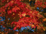 A Close View of Vibrant Autumn Leaves in Rock Creek Park Photographic Print by Stephen St. John
