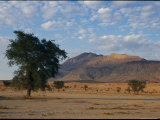 Desert Landscape with Trees Photographic Print by Nicole Duplaix
